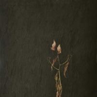 tranquillit.-assoluta-2005-cm-106x78